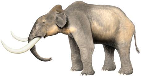 Channel Island Dwarf Mammoth