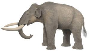 Cretan Dwarf Mammoth