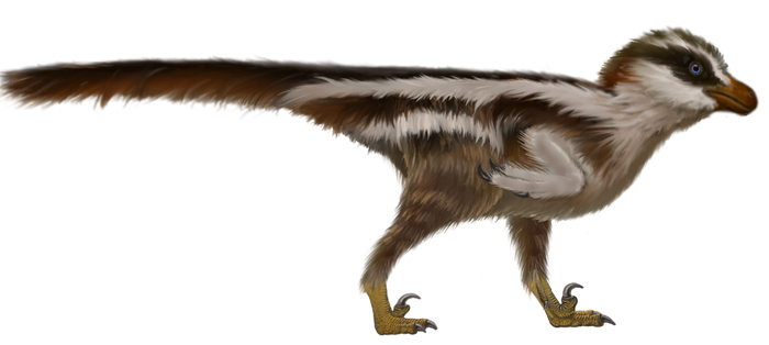 Dromaeosauriformipus-world's smallest dinosaur