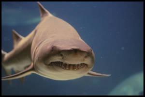 Mister Shark by vivadawolf