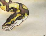 Smiles Python!