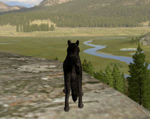 Wolfquest: Arrow