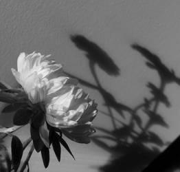 l'ombra di un fiore by chiaroscurobu