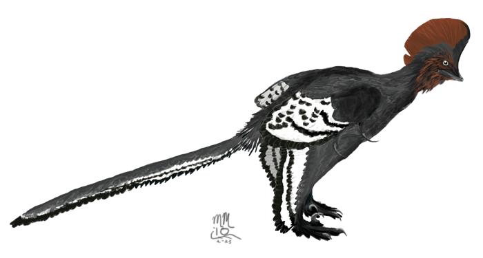 Anchiornis, autor: Matt Martyniuk