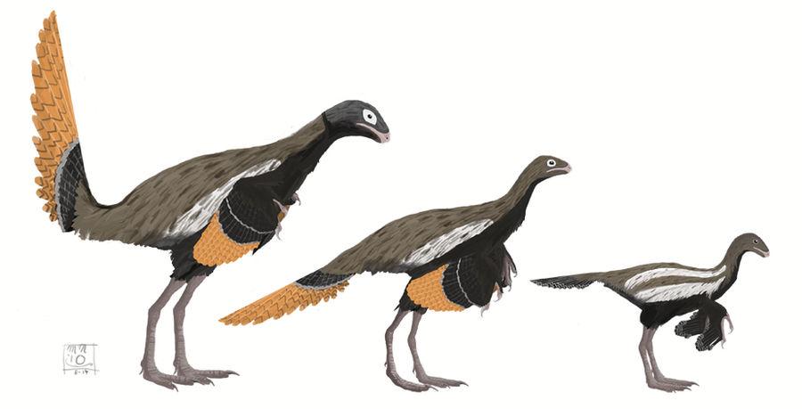 Similicaudipteryx yixianensis