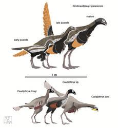 Caudipteridae by MattMart