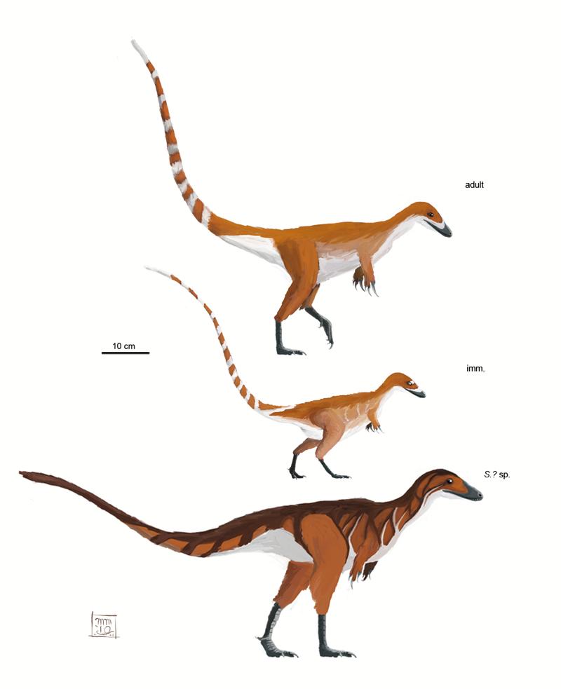 Sinosauropteryx Prima By Mattmart On Deviantart