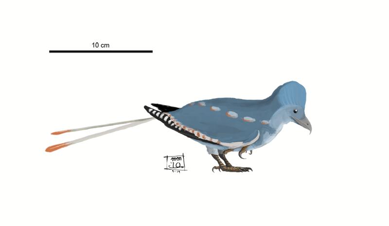 Changchengornis hengdaoziensis by MattMart