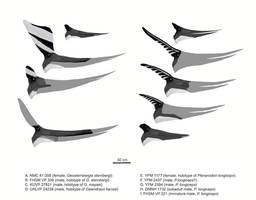 Pteranodont Profiles by MattMart