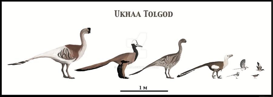 Ukhaa Tolgod Avifauna by MattMart