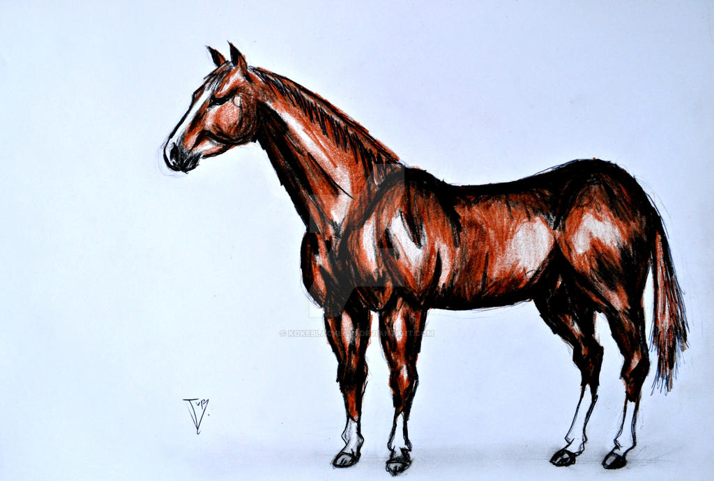 Caballo cuarto de milla quarter horse by kokeblacklion for Caballos cuarto de milla