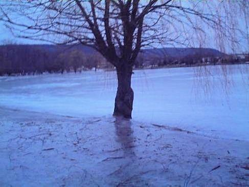 Iced_Over_Lake_Engulfs_Tree_by_JenniBee.