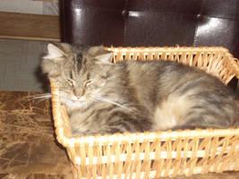 Basket Kitty