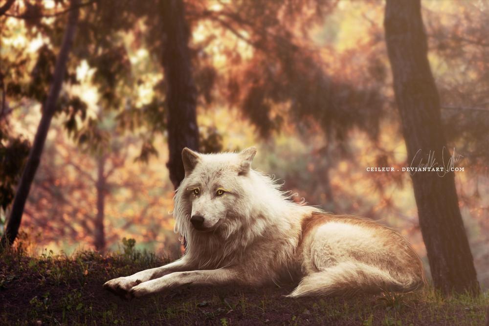 autumn by helkiri