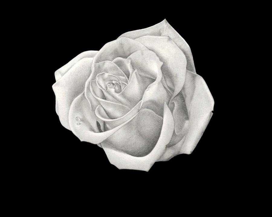 Rose by Chochimaru-Sama