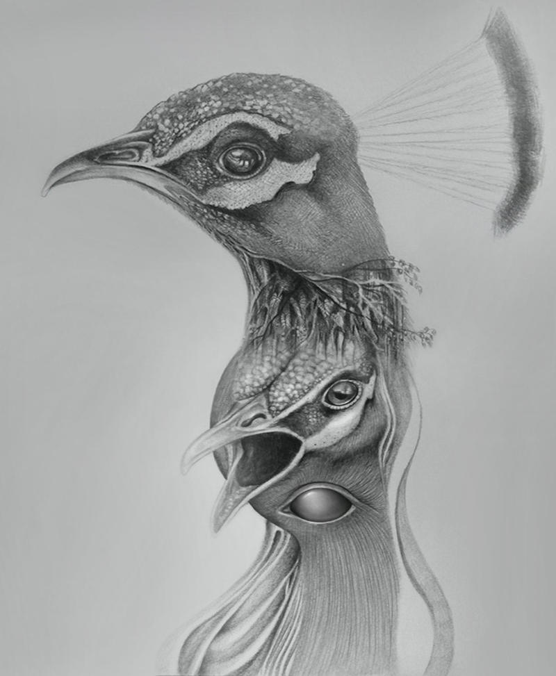 crazy peacock by gepardsim