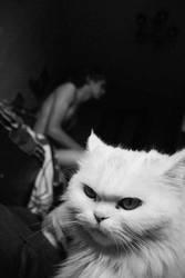 cat by supertrava