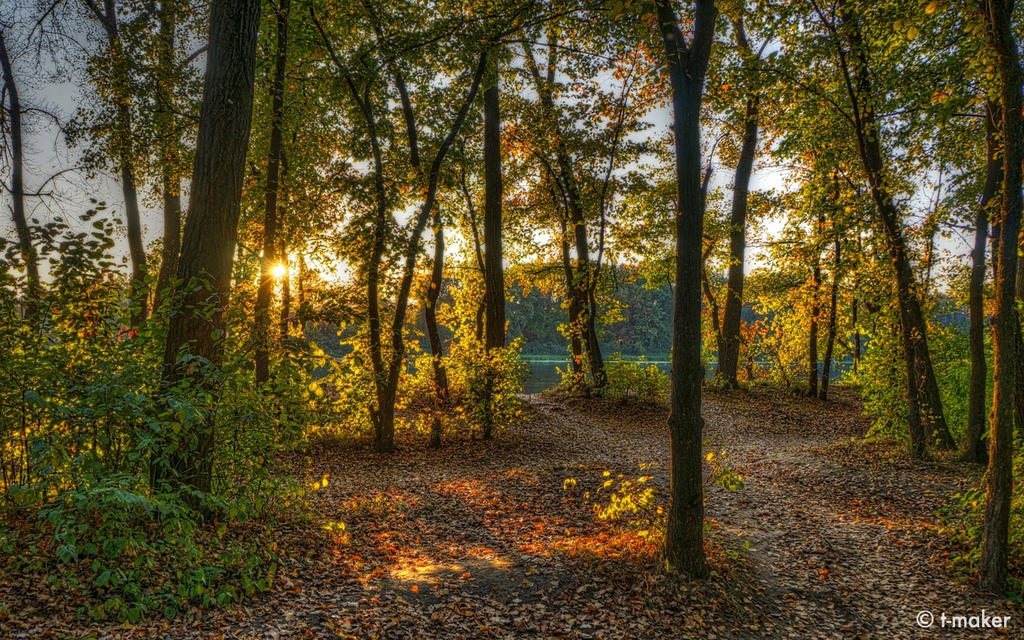 A Grove At Sunset WP by t-maker