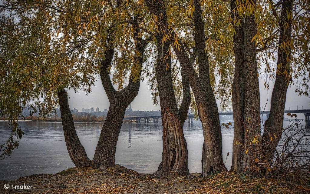 The Willows By The River WP by t-maker