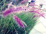 Pretty Purple Plants