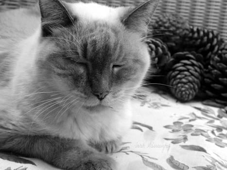 RIP, my sweet baby (last year)