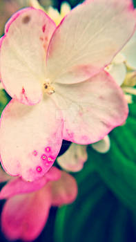 Pink Mutation