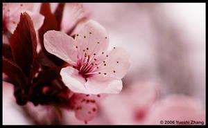 Blossom No.2 by Yueshi