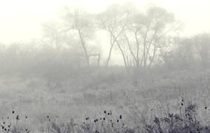 Misty Giraffe by lilithfirefly