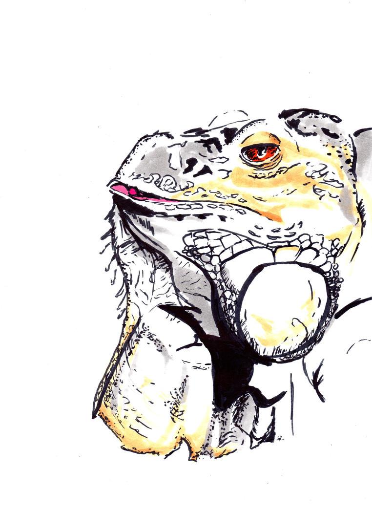 Iguana Study by arctifox
