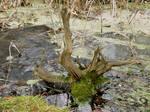 swamp stock 2