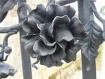 black blossom stock