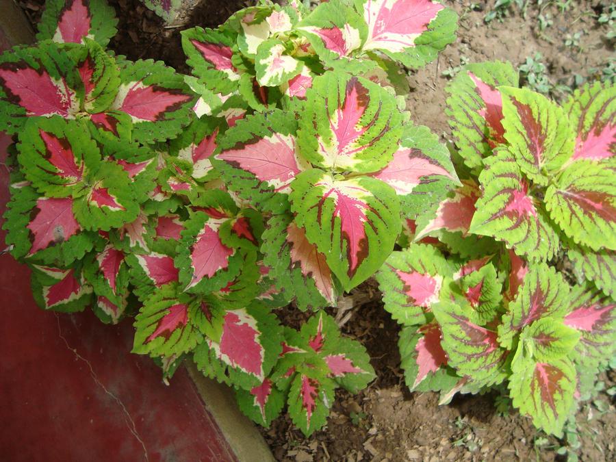 Fotos de las plantas para embellecer mi casa que tengo - Plantas de sombra exterior ...