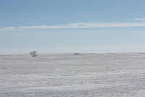 Winter field by TommyGK