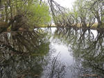 Swamp stock