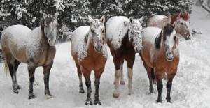 Winter horse stock