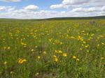 Grassland Stock
