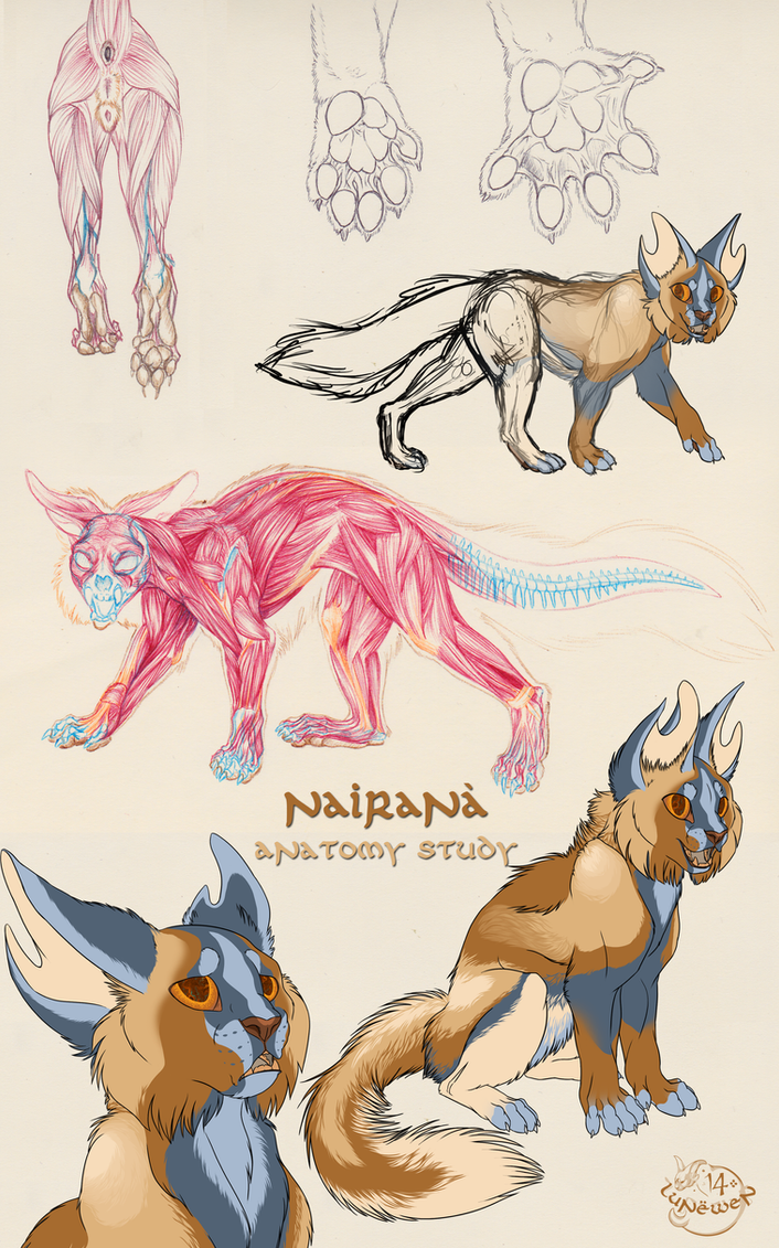 Nairana Study by Lunewen