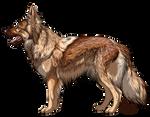 Altdeutscher Schaferhund liver sable