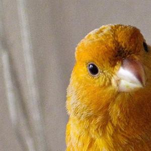 cuchoman's Profile Picture