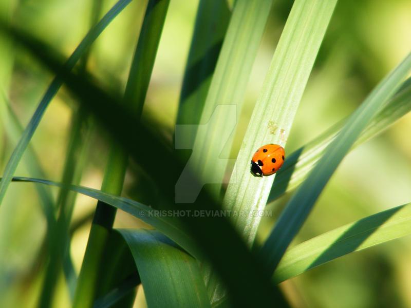 cute bug by KrisShOt