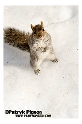 Gimme your nuts... please...