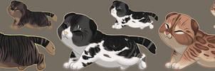 Kitten Delicacy Adopts : OTA : OPEN