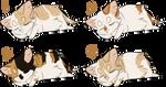 Kits of a Masked Fox | MaskedFox Litter