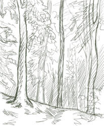 Untitled: sketch of the forest
