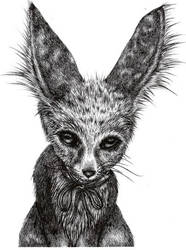 Sad Mr Fox