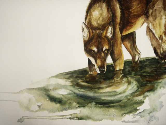 "ahm... wolf oo"" by cottondragon"