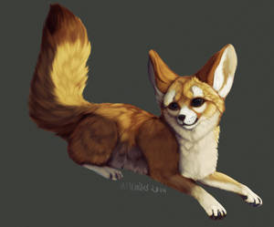 I love Fennecs