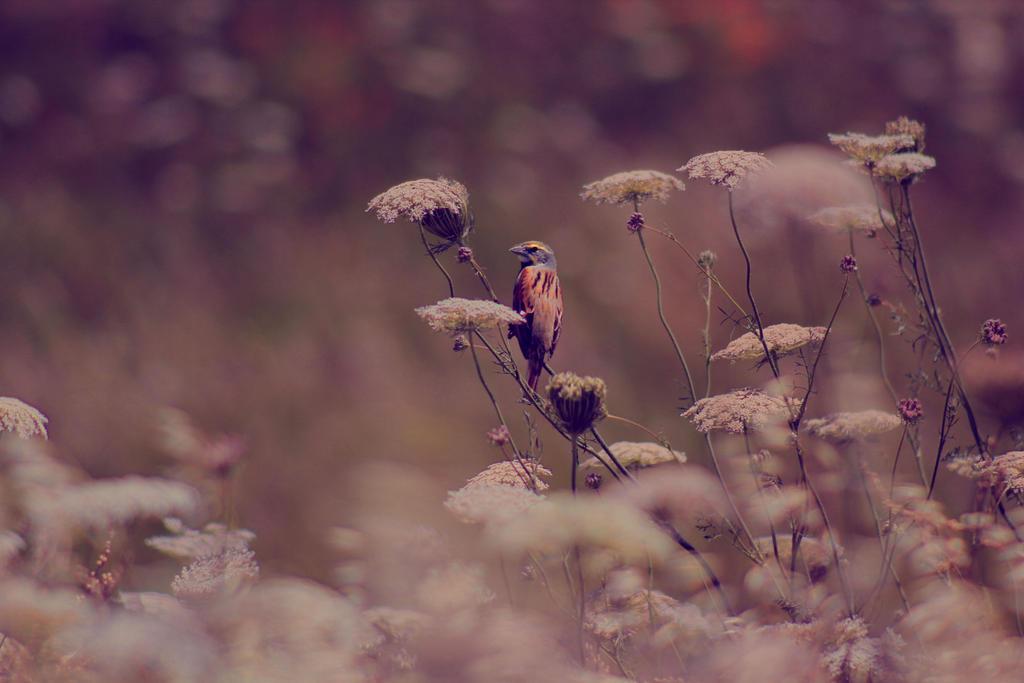 Song Bird by Minicorndogs