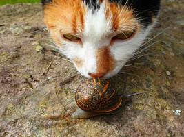 Snail Sniffer