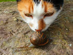 Snail Sniffer by PortalToAnywhere